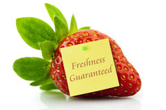 Freshness guaranteed strawberry Stock Image