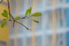 Freshness leaves on building background. Freshness leaves on school building background stock photos