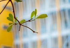Freshness leaves on building background. Freshness leaves on school building background royalty free stock images
