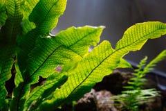 Freshness lush green tropic fern leaves stock images