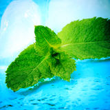 Freshness mint. Freshness twig of mint with ice and waterdrops Stock Images
