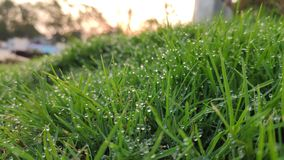 Freshness during morning over grass leaves stock photography