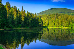 Freshness near forest. Landscape by the lake in the early morning. coniferous forest near the lake and the forest mountain Royalty Free Stock Photo