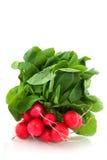 Freshness radish Stock Image