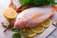 Freshness reddens the Nile Tilapia fish Royalty Free Stock Images