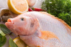 Freshness reddens the Nile Tilapia fish Stock Photography