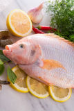 Freshness reddens the Nile Tilapia fish Stock Images