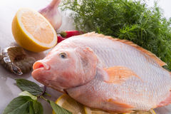 Freshness reddens the Nile Tilapia fish Stock Photos