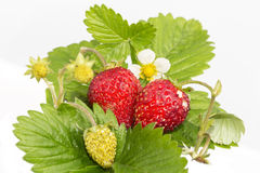 Freshness. Ripe fruits. Stock Photo