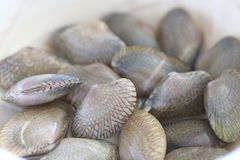 Freshness of shellfish. Royalty Free Stock Images
