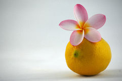 Freshness in spring royalty free stock images