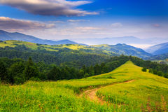 Freshness of a summer morning in the mountains. Green grass and trees in the mountains under the fresh blue morning sky Royalty Free Stock Image