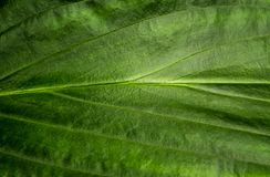 Freshness tropical leaves surface as rife forest background. Top view of full frame freshness tropical leaves surface texture in the rife forest nature stock image