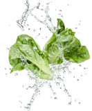 Freshness of vegetables Royalty Free Stock Photos