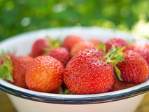 Freshs strawberry. Royalty Free Stock Photos
