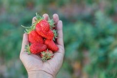 Freshstawberry förestående Royaltyfri Foto