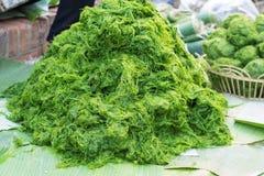 Freshwater algae (Spirogyra neglecta) Royalty Free Stock Photos