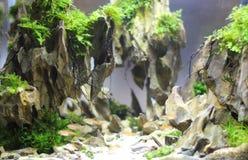 Freshwater aquarium design. Freshwater nano aquarium design in the style of Takashi Amano. The exhibition of freshwater and marine aquariums in the city of Kiev royalty free stock images