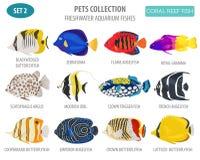 Freshwater Aquarium Fish Breeds Icon Set Flat Style Isolated On Stock Photos
