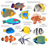 Freshwater aquarium fish breeds icon set flat style isolated on Stock Photo