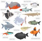 Freshwater aquarium fishes breeds icon set flat style isolated o Royalty Free Stock Image
