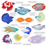 Freshwater aquarium fishes breeds icon set flat style isolated o Royalty Free Stock Photo