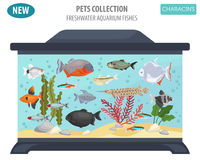 Freshwater aquarium fishes breeds icon set flat style isolated o Stock Photography