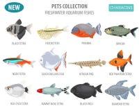 Freshwater aquarium fishes breeds icon set flat style isolated o Royalty Free Stock Photos