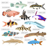 Freshwater aquarium fishes breeds icon set flat style isolated o. N white. Loaches, gobies, killifishes. Create own infographic about pets. Vector illustration Royalty Free Stock Photography
