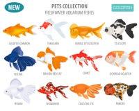 Freshwater aquarium fishes breeds icon set flat style o vector illustration
