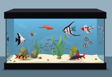 Freshwater aquarium illustration Stock Image