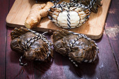Freshwater crabs Stock Images