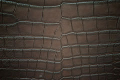 Freshwater crocodile belly skin textureใ Stock Photo