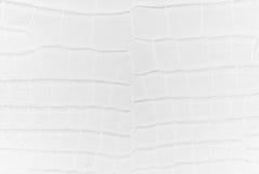 Freshwater crocodile bone skin texture background. Stock Photos