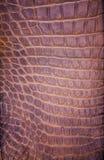 Freshwater crocodile skin texture Stock Image
