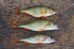 Freshwater fish. On the wooden table Stock Photos