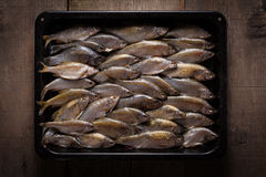 Freshwater fish in black tray Royalty Free Stock Photography