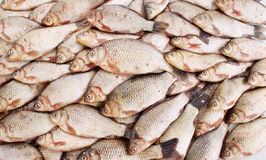 Freshwater fish carp Stock Photo