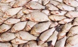 Freshwater fish carp Stock Photo