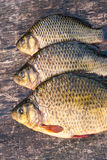 Freshwater fish carp on a wooden board Stock Photography