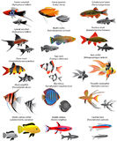 Freshwater fish. Collection of different species of freshwater fish Royalty Free Stock Photo