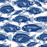 Freshwater fish endless vector pattern, nature and marine theme Royalty Free Stock Image