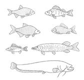 Freshwater fish in outlines - vector illustration. Different freshwater fish in outlines. Vector illustration. EPS8 Stock Photos