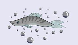 Freshwater fish. Stock Photo