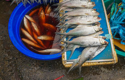 Freshwater fish sold in traditional market photo taken in Jakarta Indonesia Stock Photo