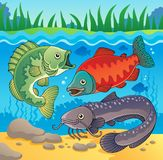 Freshwater fish theme image 3 Royalty Free Stock Images