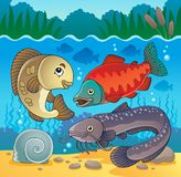 Freshwater fish theme image 5 Stock Photo