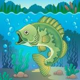 Freshwater fish topic image 1 Stock Photography