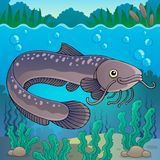 Freshwater fish topic image 2 Royalty Free Stock Photography
