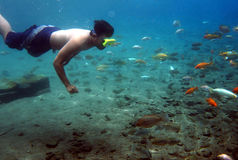 Freshwater fish Royalty Free Stock Image